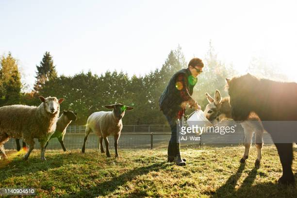 hand fed animals are happy animals - daily bucket stock pictures, royalty-free photos & images