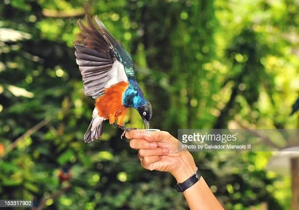 hand feeding bird - jurong bird park stock pictures, royalty-free photos & images