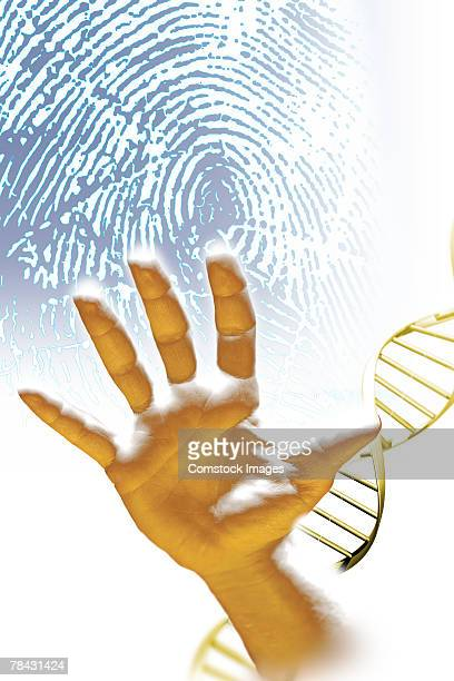 Hand , fingerprint and DNA helix