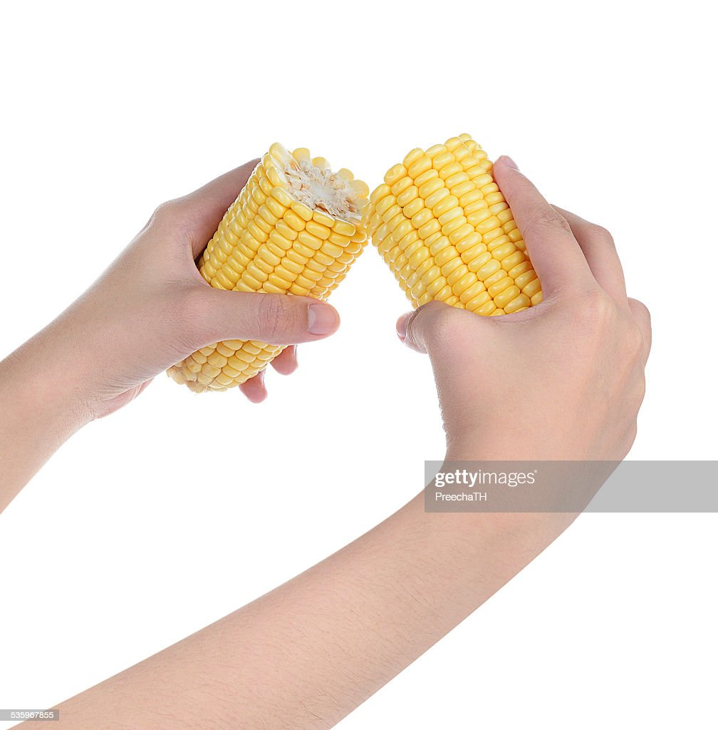 hand force sweet corn isolated on white : Stock Photo