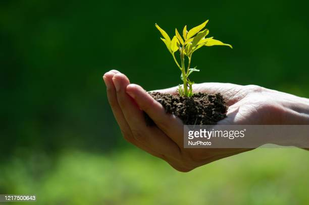 A hand full of crop land with a small plant is seen in L'Aquila Italy on June 4 2020 World Environment Day is celebrated on 5 June every year and is...