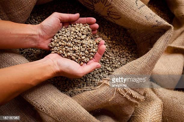 hand mit grünen Kaffee-Bohnen