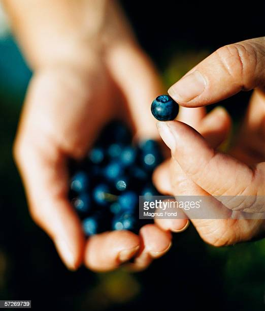 A hand holding a blueberry and a hand in the background filled with blueberries, close-up.