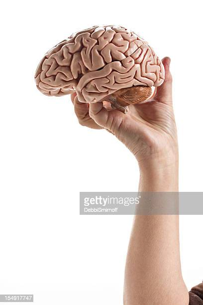 Hand holding A Brain Isolated