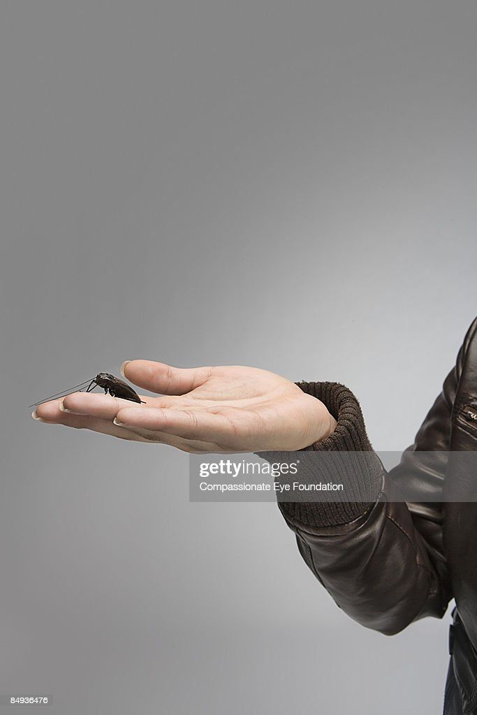 hand holding a bug : Stock Photo