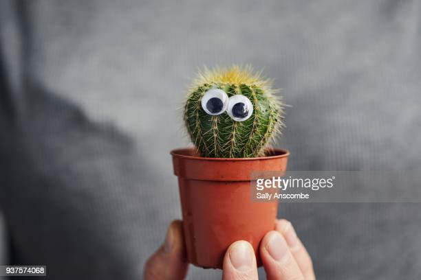 hand holding a cactus - googly eyes stock pictures, royalty-free photos & images