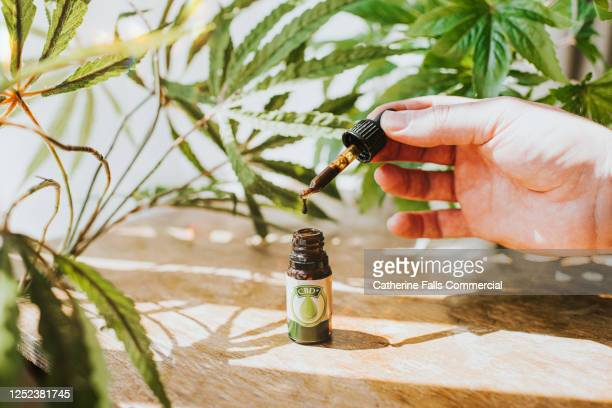 hand holding a cbd oil dropper beside bottle, surrounded by cannabis plants - cbd oil stock pictures, royalty-free photos & images