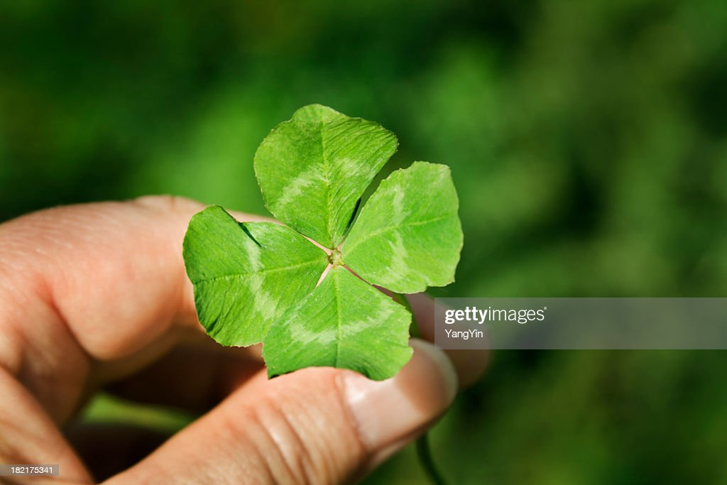 Hand Holding a Four Leaf Clover Green Good Luck Charm : Stock Photo