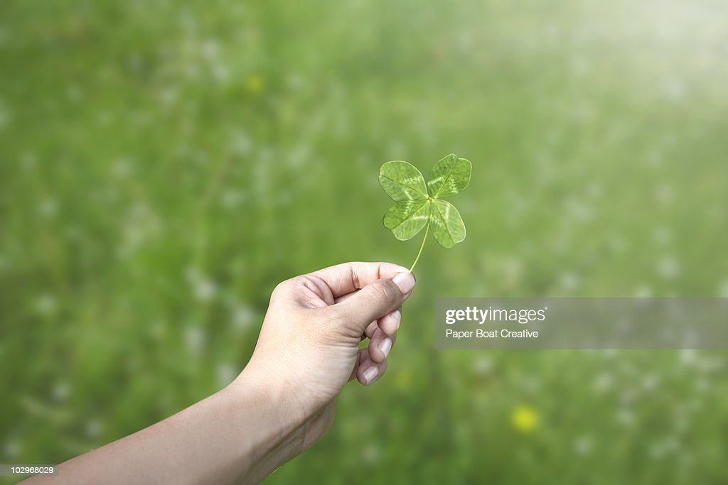 Hand holding a four leaf clover in a green field : Stock Photo