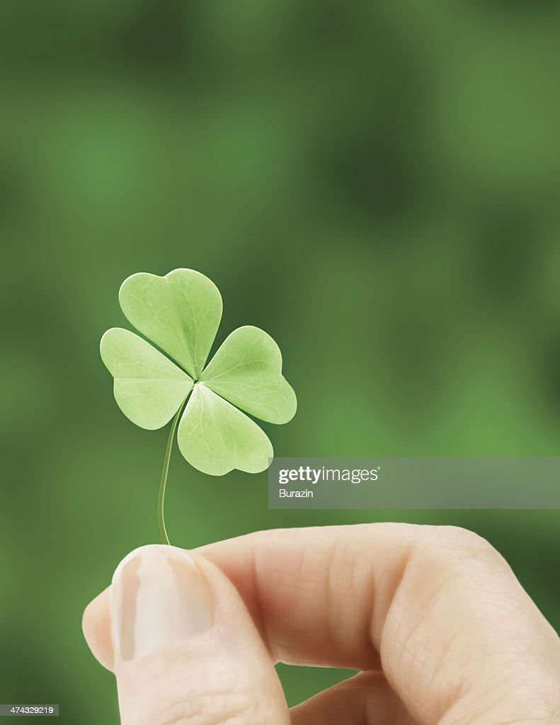 Hand holding a four leaf clover : Stock Photo