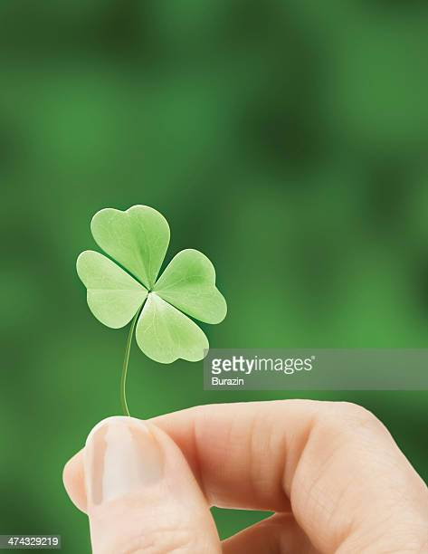 hand holding a four leaf clover - luck stock pictures, royalty-free photos & images