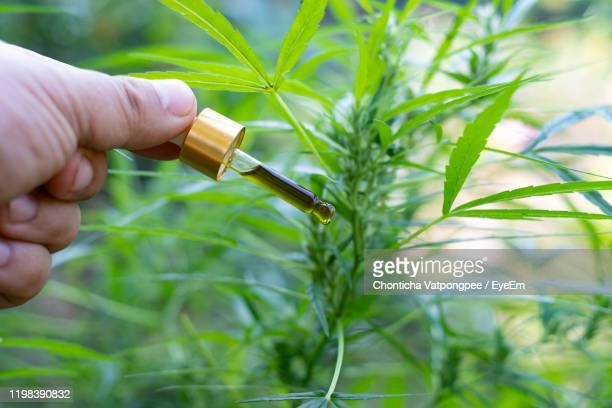 hand holding a glass bottle with cbd oil at cannabis flowers blooming background - sublingual stock pictures, royalty-free photos & images