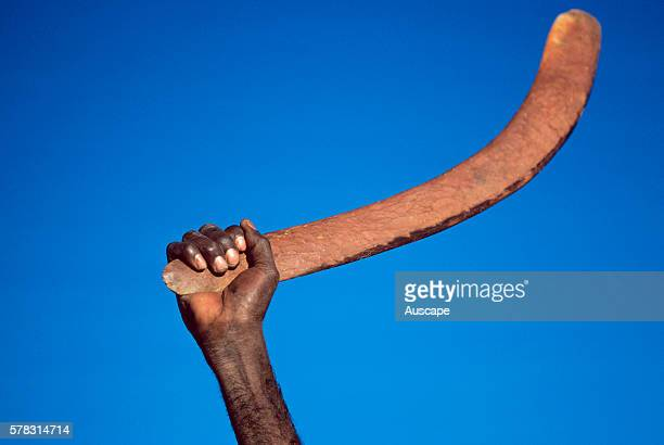Hand holding a hunting boomerang Central Australia