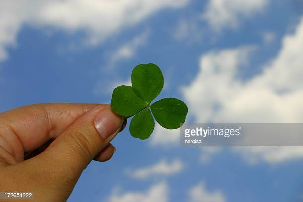 Hand holding a lucky four leaf clover up to the sky