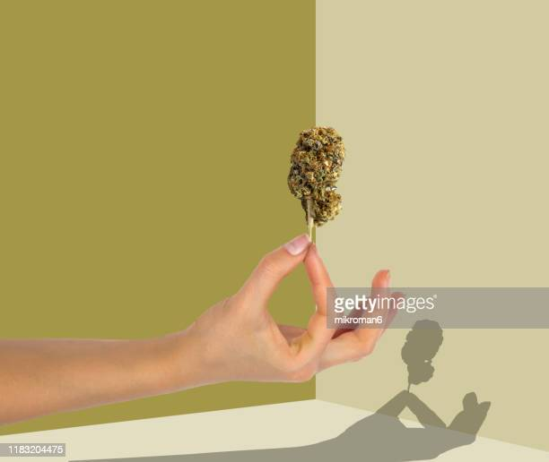 hand holding a marijuana flower with a shadow - science and technology stock pictures, royalty-free photos & images
