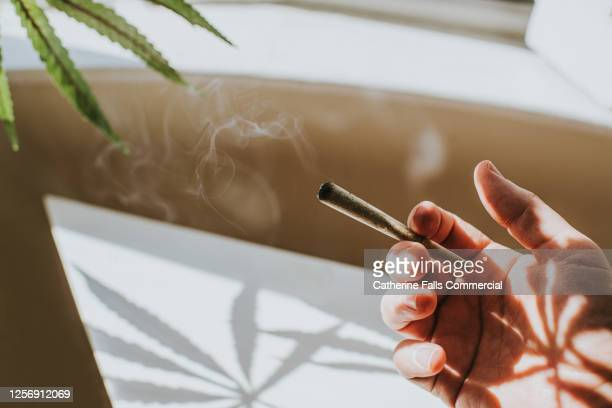 hand holding a spliff in a sunny home environment. cannabis plant casts a shadow onto white table. - uncultivated stock pictures, royalty-free photos & images
