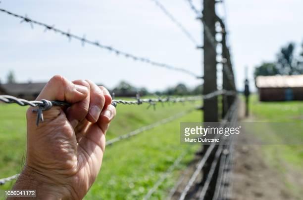 夏の日の間にポーランドのクラクフで有刺鉄線を持っている手 - auschwitz ストックフォトと画像