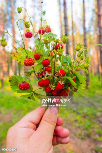 Hand holding bouquet of strawberries in forest