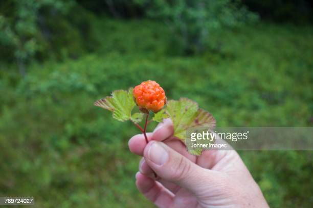 Hand holding cloudberry