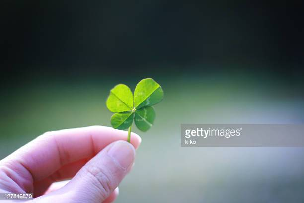hand holding clove - 4 leaf clover stock photos and pictures