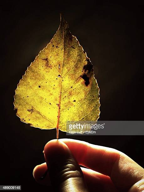 Hand holding dry leaf against black background