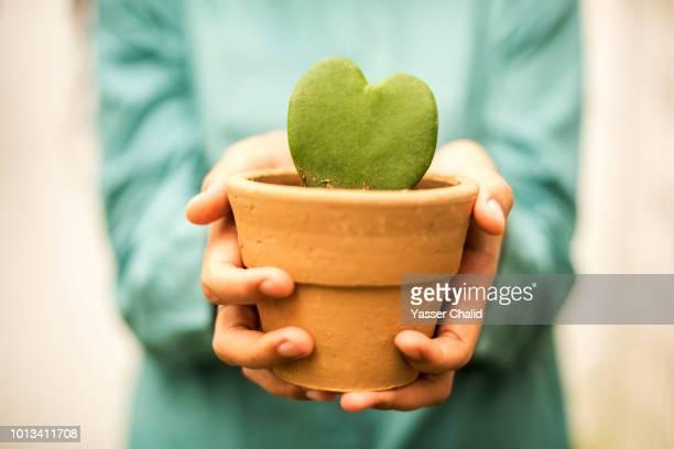 Hand Holding Flower Pot