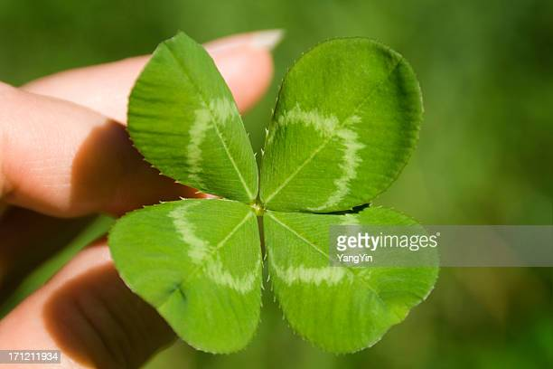 Hand Holding Four Leaf Clover for St. Patrick's Day Luck