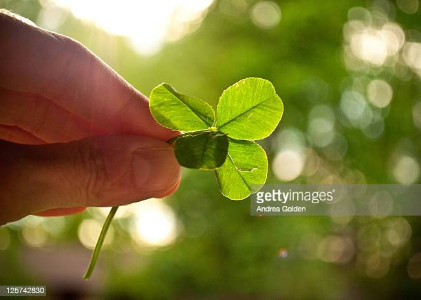 Hand holding four-leaf clover in rays of sunlight