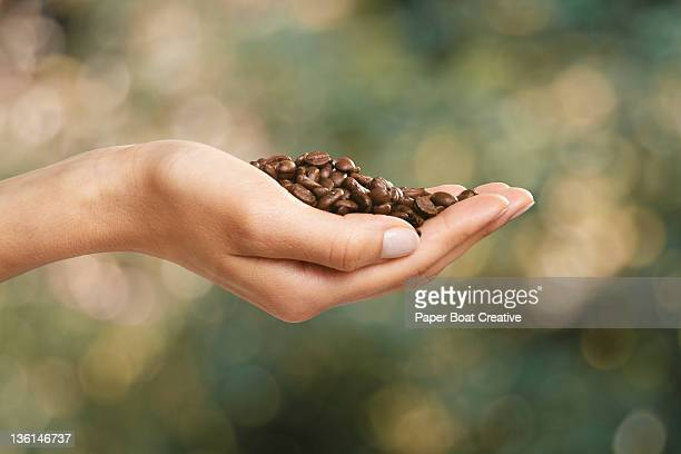 hand holding fresh roasted organic coffee beans