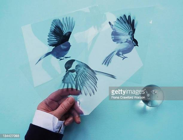 Hand holding images of birds