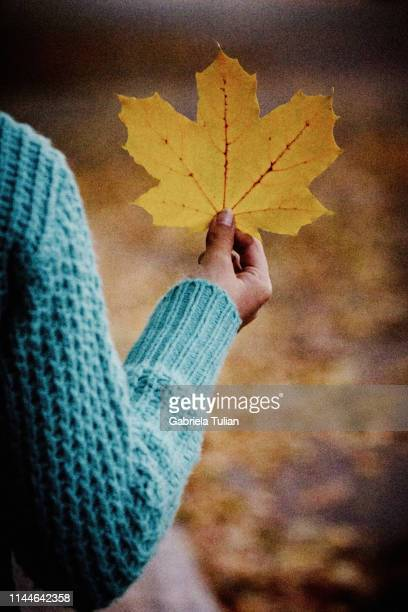 hand holding leaf in autumn - gabriela stock pictures, royalty-free photos & images
