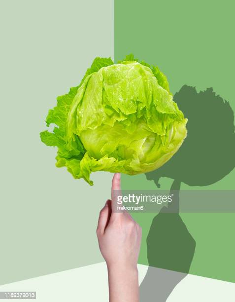 hand holding lettuce with a shadow - vegan food stock pictures, royalty-free photos & images
