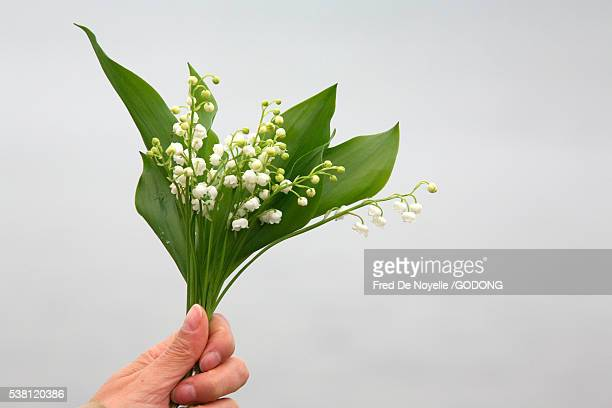 hand holding lily-of-the-valley flowers - mughetti foto e immagini stock