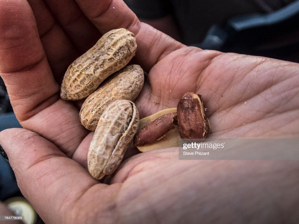 Hand holding peanuts : Stock Photo