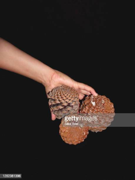 hand holding pine cones against black background - briel stock pictures, royalty-free photos & images