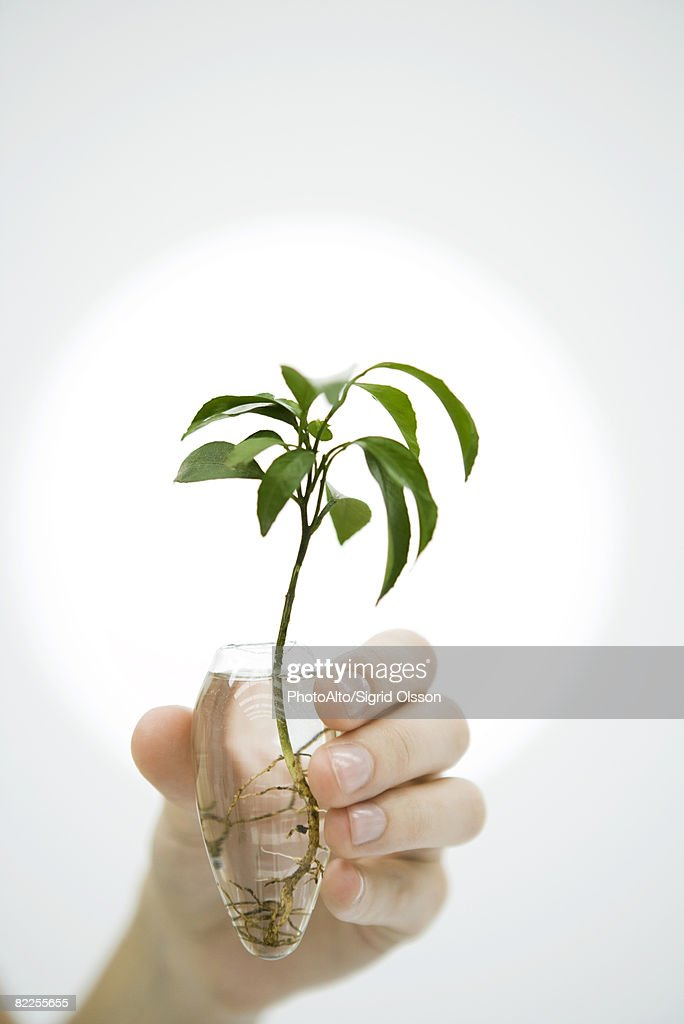 Hand Holding Plant In Vase Of Water Closeup Stock Photo Getty Images
