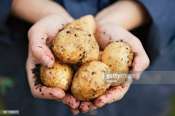 hand holding potatoes - raw potato stock pictures, royalty-free photos & images