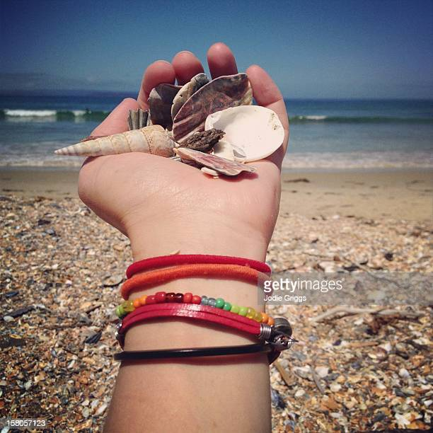 Hand holding shells at the beach