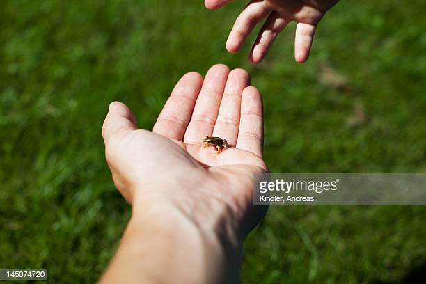 Hand holding small frog