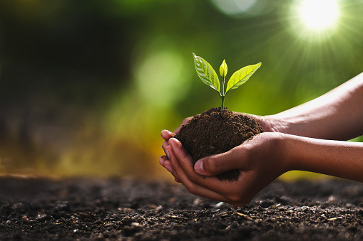 hand holding small tree for planting. concept green world 1135253768