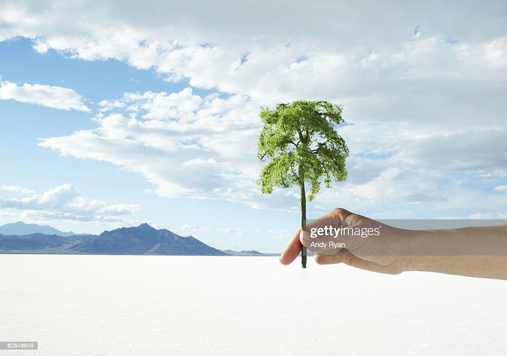 Hand holding small tree in desert. : Stock Photo
