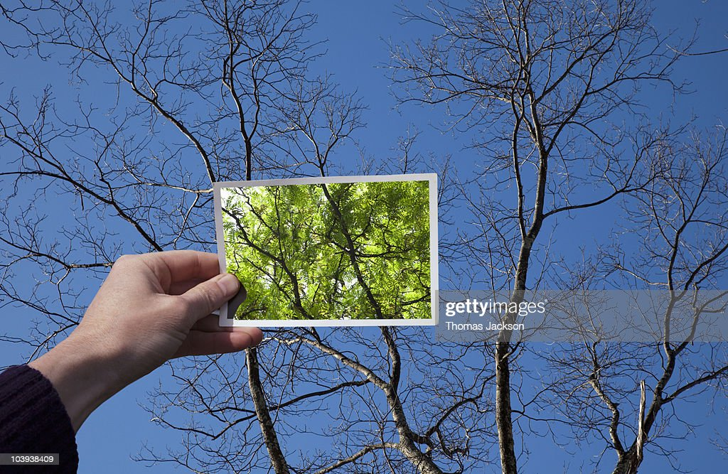 Hand holding snapshot of trees : Foto de stock