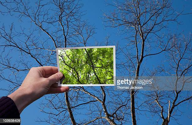 hand holding snapshot of trees - hope stock pictures, royalty-free photos & images