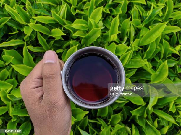 hand holding tea cup against tea fields - tea crop stock pictures, royalty-free photos & images