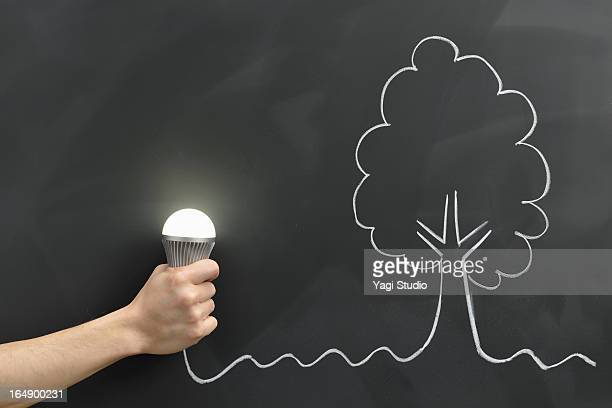 Hand holding the bulb, tree drawn on a blackboard