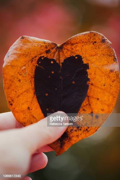 Hand holding to heart shaped leaves
