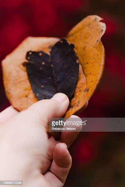 Hand holding two heart shaped autumn leaves