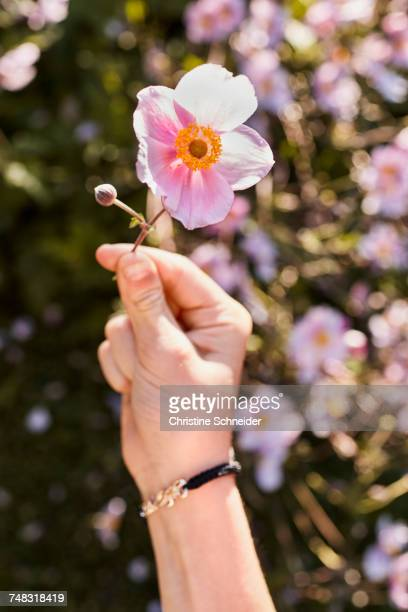 Hand holding up pink flower