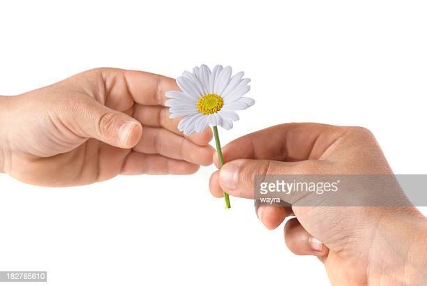 Hand, die wunderschönen marguerite