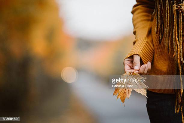 Hand holding yellow maple leaves on autumn sunny background.